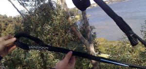 professional tree pruning and lopping in western australia