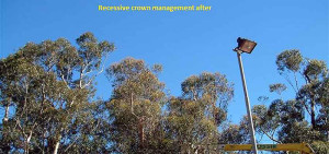 tree pruning services in perth wa