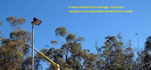 tree lopping in perth